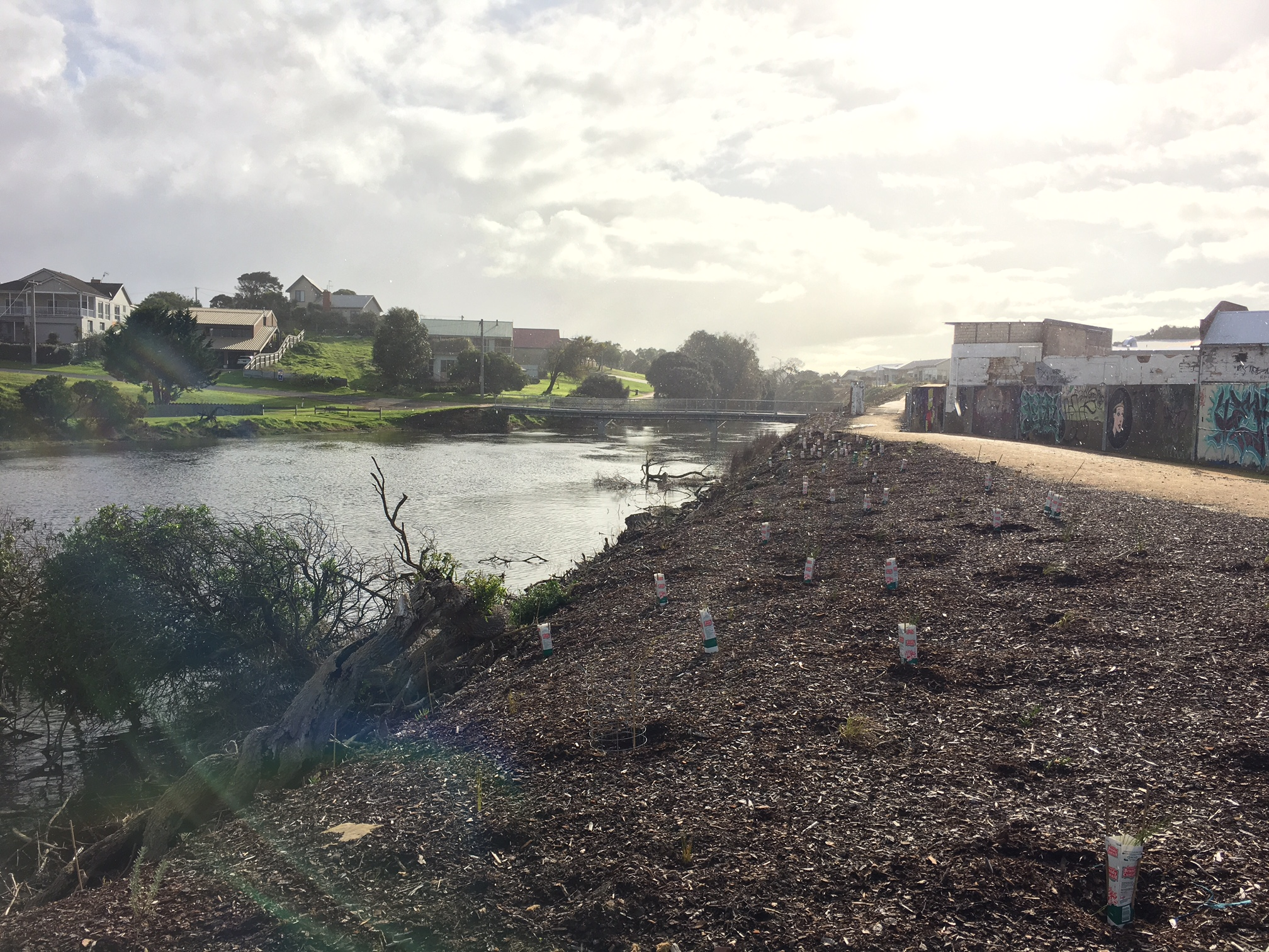Removal of weeds and preparing bank for new native vegetation